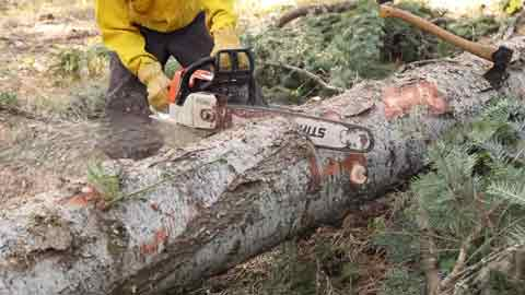 Safety Precautions When Holding Logs