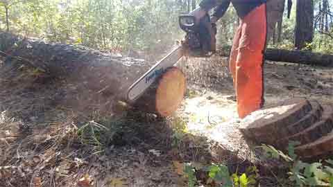 What to Consider When Cutting Logs With a Chainsaw