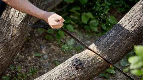 Does a Hand Saw Work Well For Cutting Down a Tree