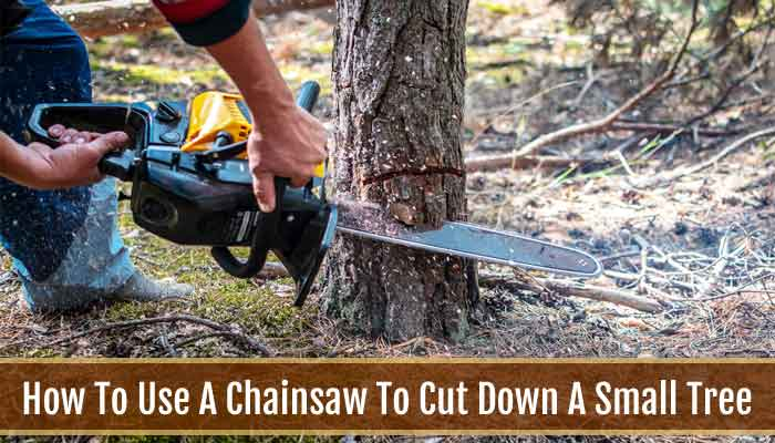 How To Use A Chainsaw To Cut Down A Small Tree