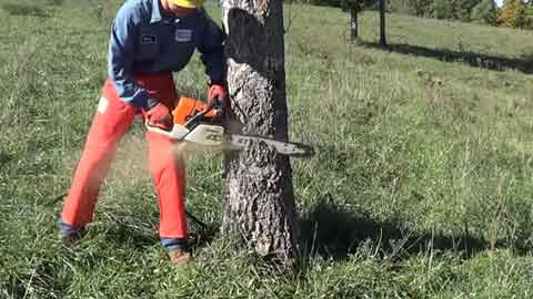 How to Choose a Chainsaw for Small Trees?