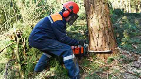 How to Use a Chainsaw to Cut Down a Small Tree Step By Step