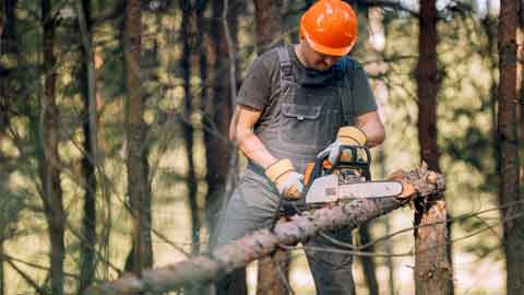 Why Do You Use a Chainsaw to Cut Down a Small Tree?
